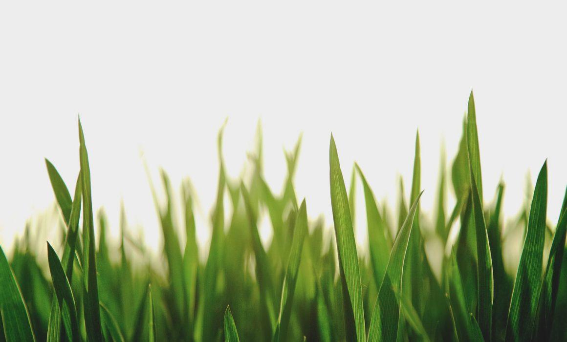 Bescherm gazon gras winter