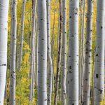 Welke bomen snoeien najaar